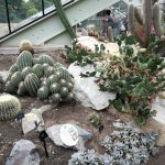 Kaktusai ir sukulentai Kew Gardens